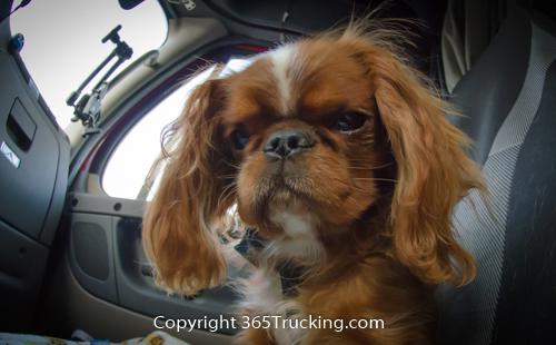 Pet_Transport_101114_Charlie-42.jpg