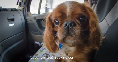 Pet_Transport_101114_Charlie-21.jpg