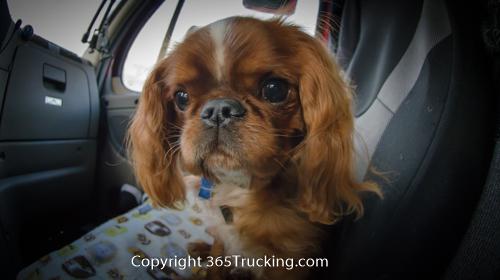 Pet_Transport_101114_Charlie-25.jpg