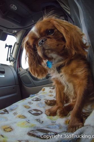 Pet_Transport_101114_Charlie-54.jpg