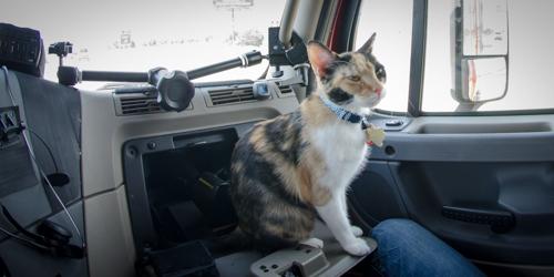 Pet_Transport_Kit_Kat_083114-27.jpg