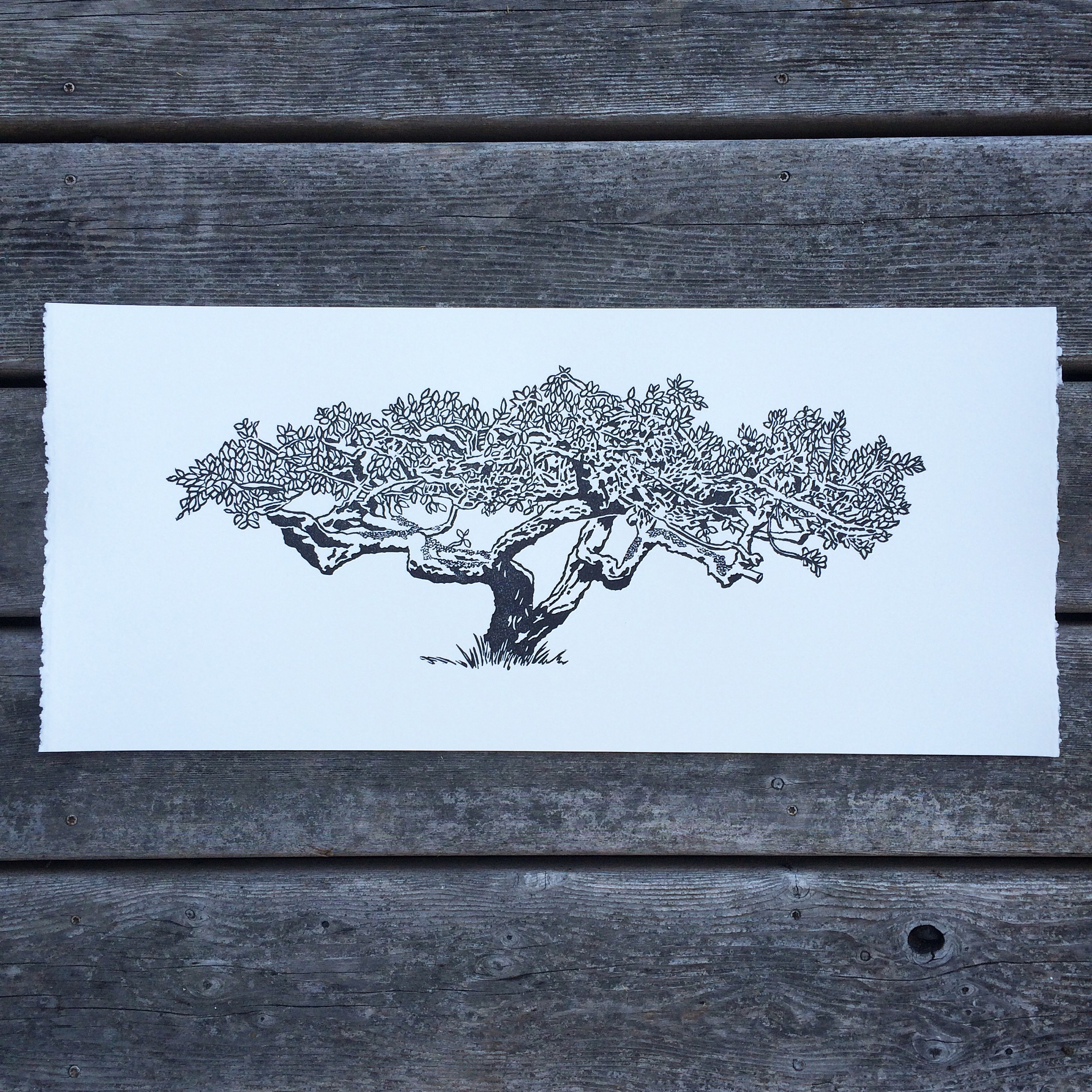 This is a new print, and it's for my last wedding clients of the year. I needed to cut it and print it rather large to get the details, so I will also have a signed and numbered edition of these beautiful plum trees available soon.