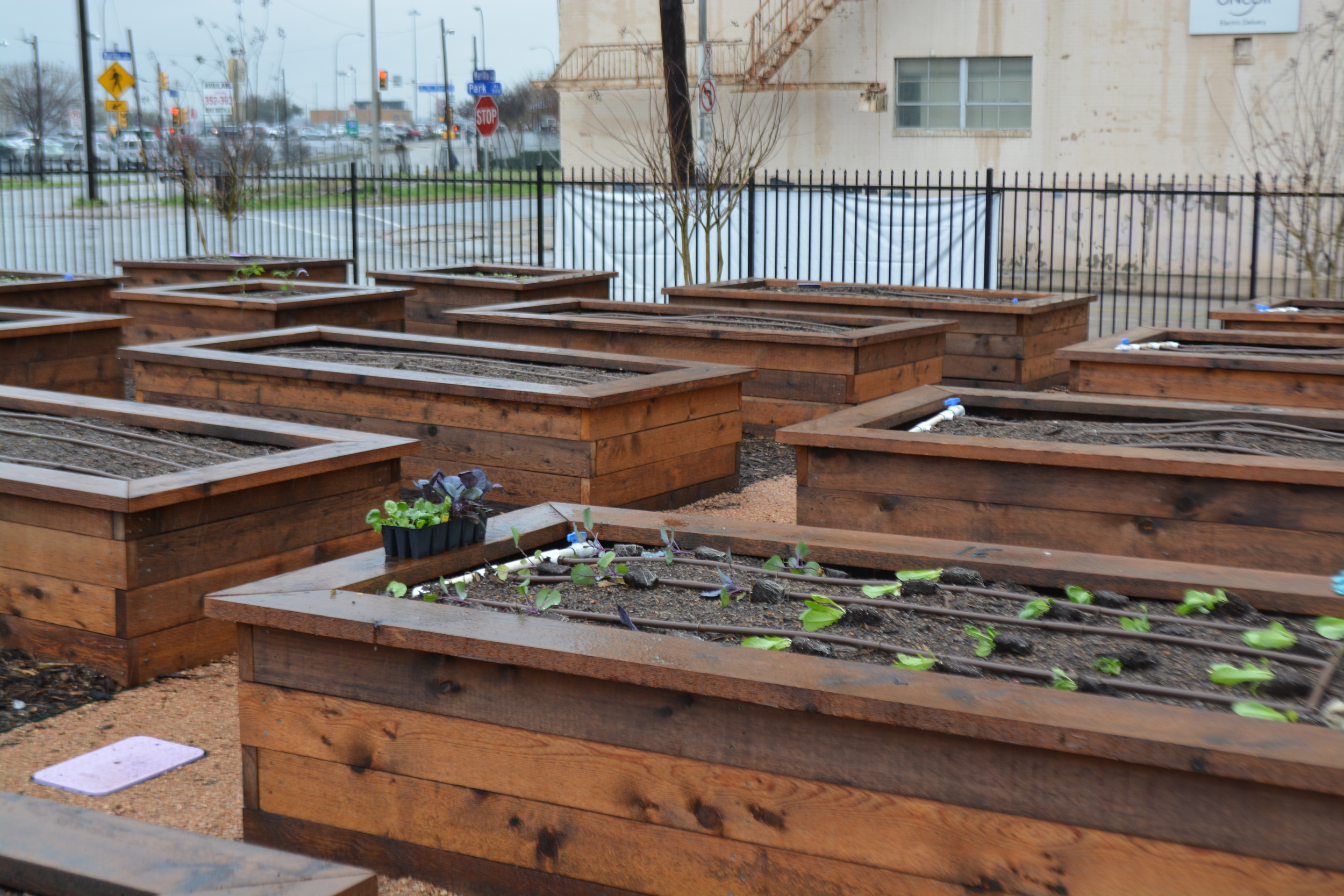 The community garden raised beds.