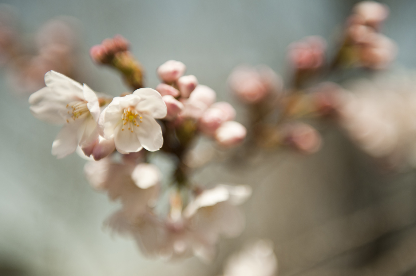 Jamie Lowe Photography Cherry Blossom Kyoto Japan_2.jpg
