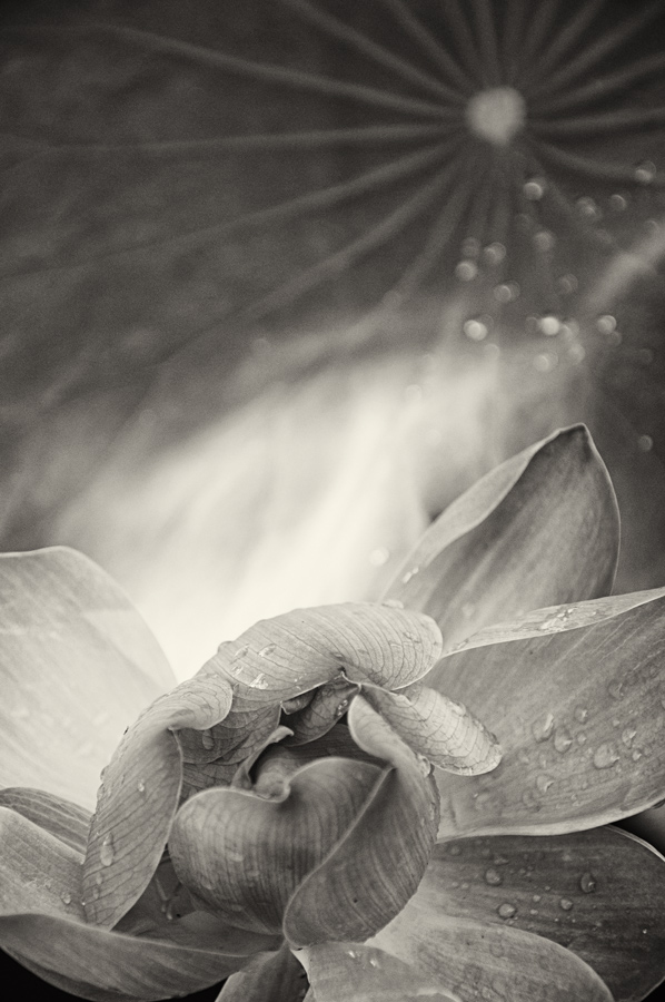 Jamie Lowe Photography Lotus Bali.jpg