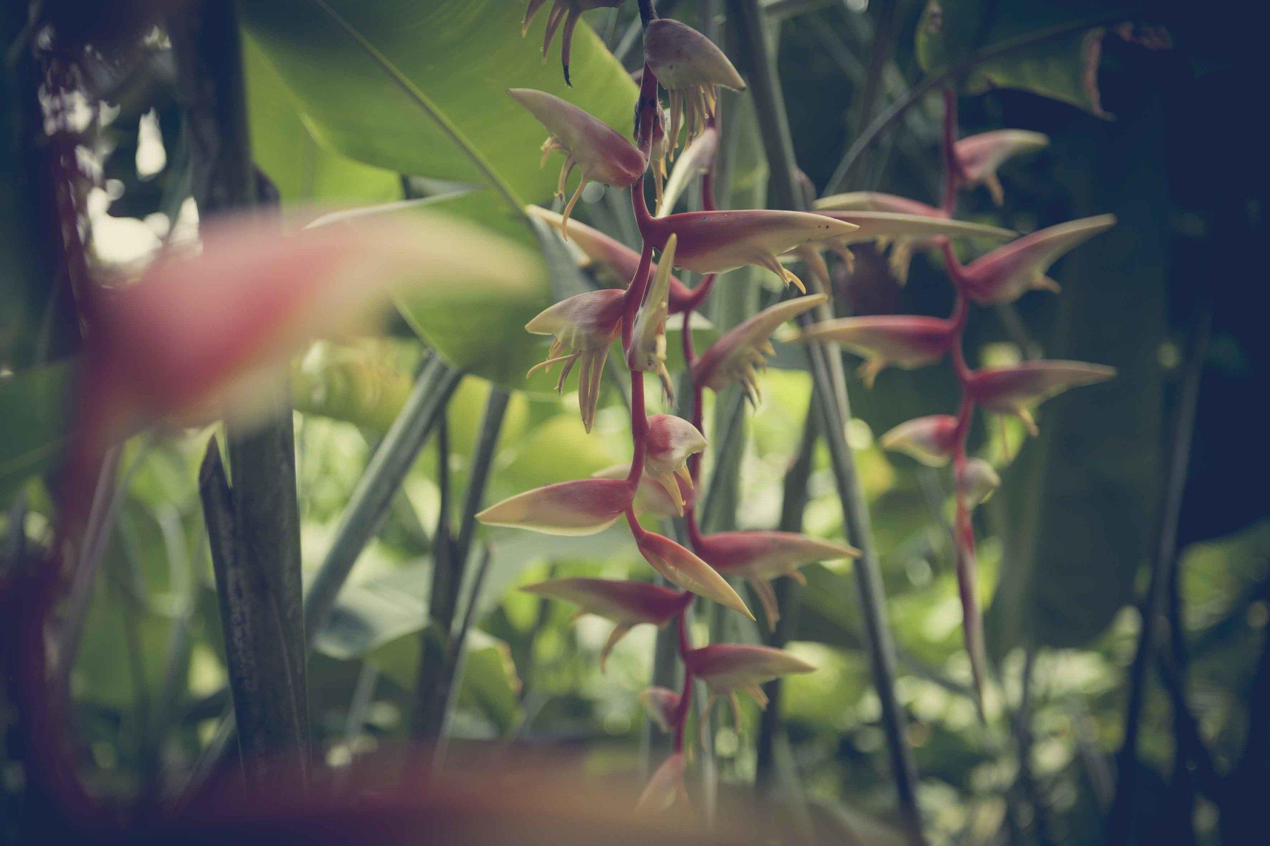 Jamie Lowe Photography Singapore Botanic Garden July 2015