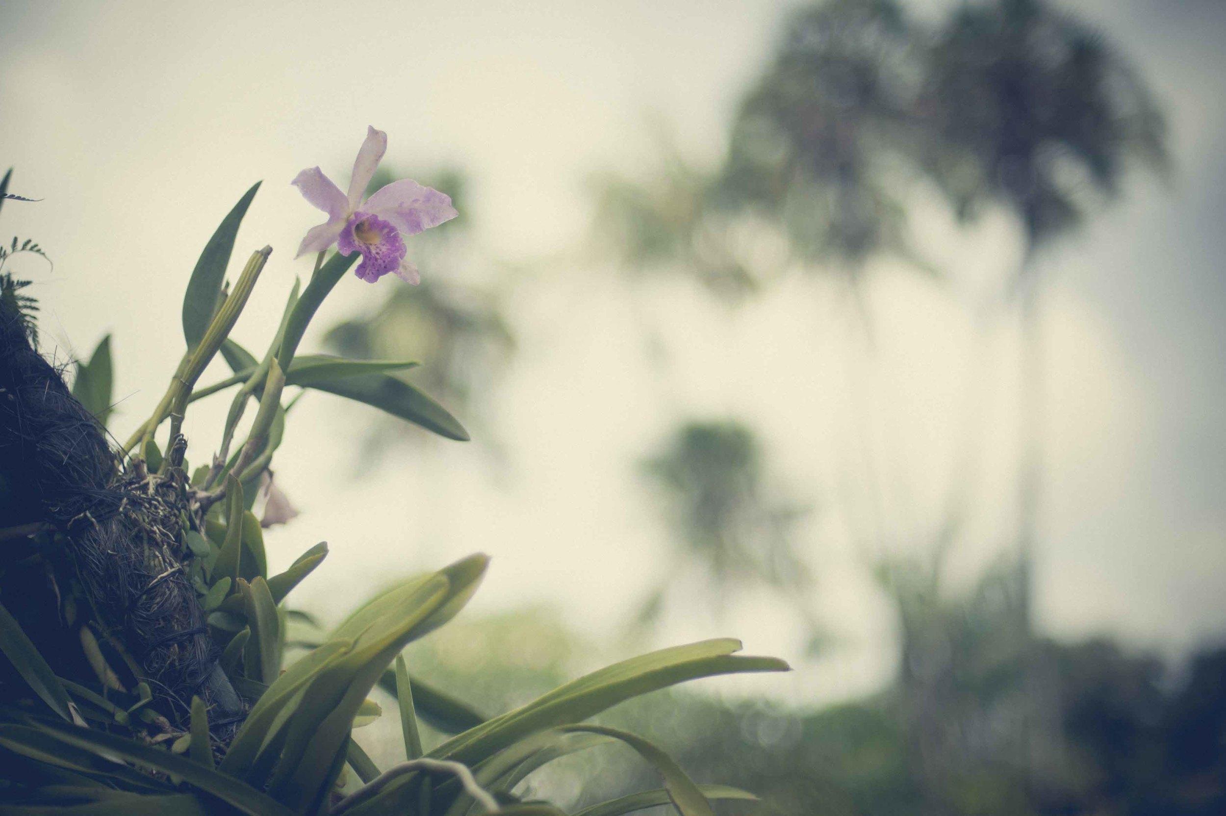 Jamie Lowe Photography Singapore Botanic Garden July 2015_14.jpg