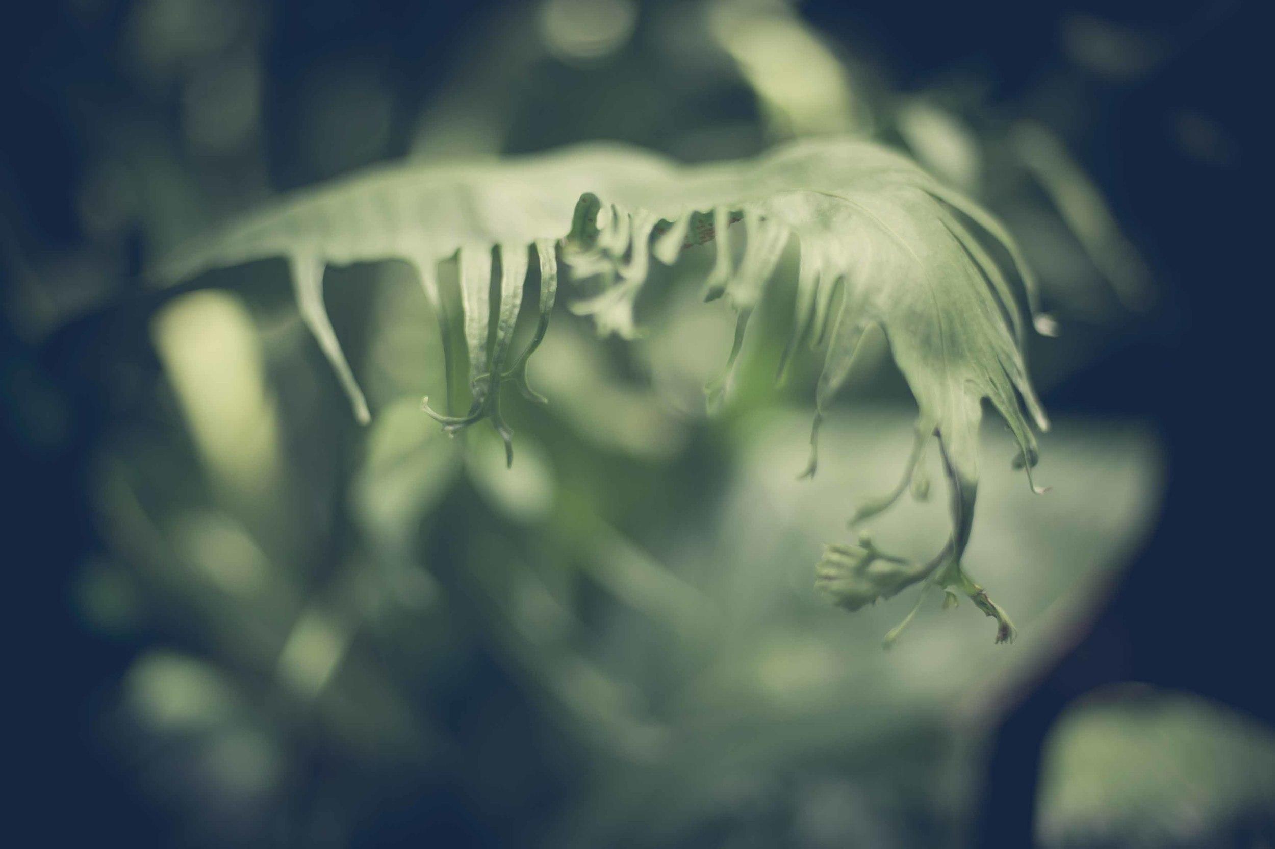 Jamie Lowe Photography Singapore Botanic Garden July 2015_23.jpg