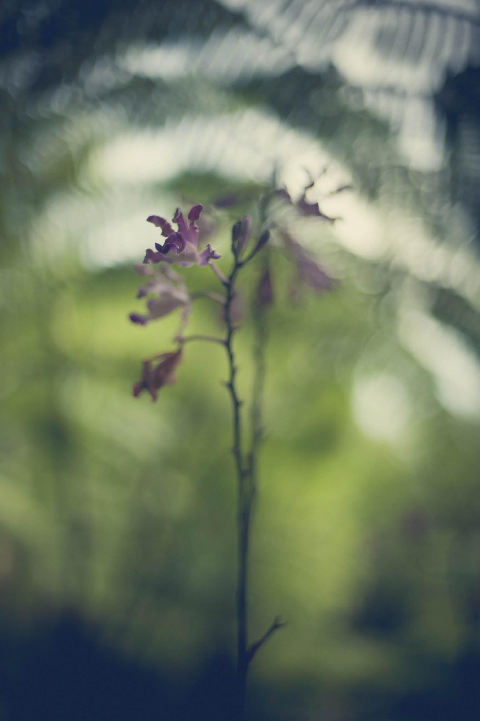 Jamie Lowe Photography Singapore Botanic Garden July 2015_18.jpg