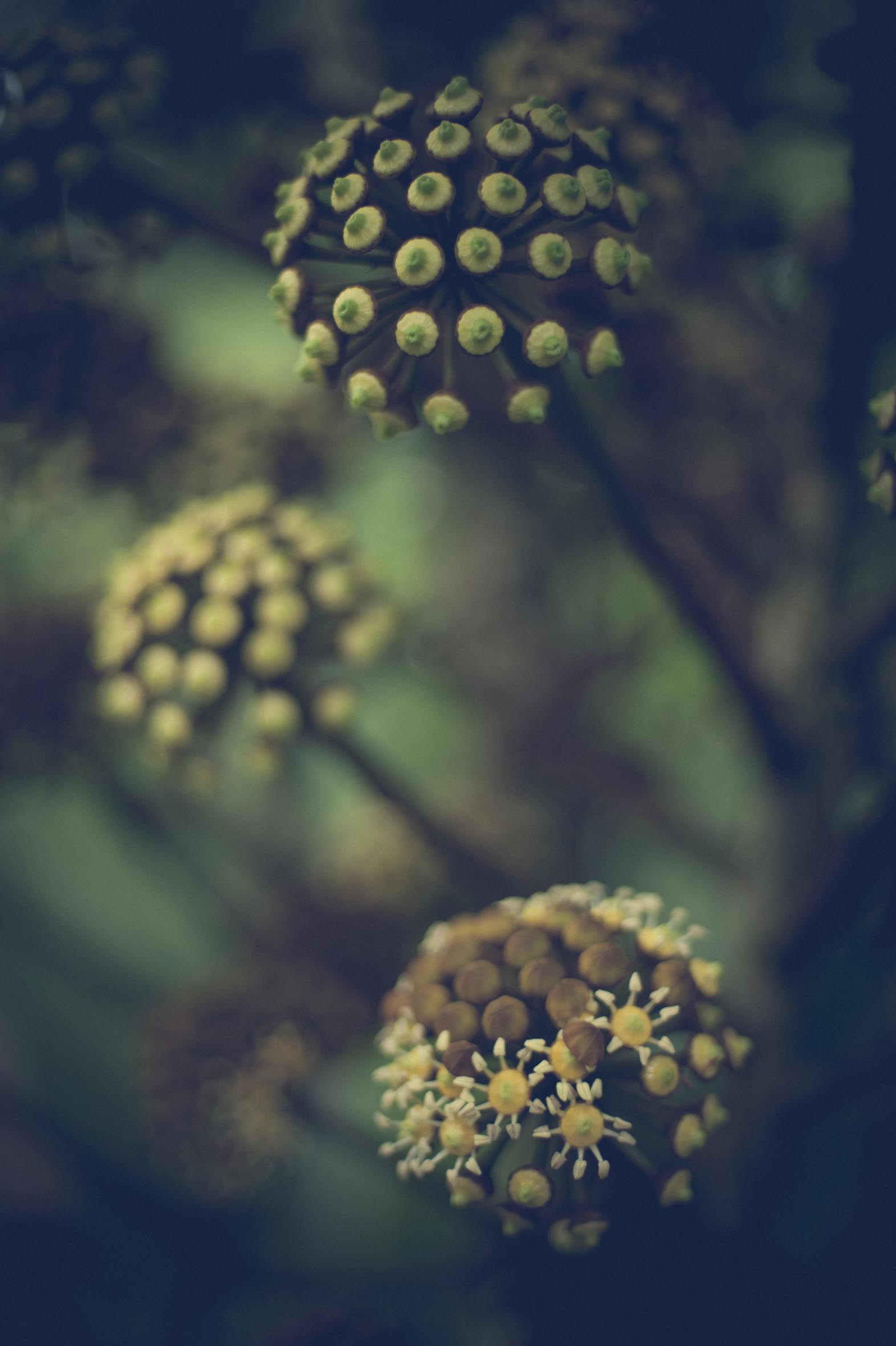Jamie Lowe Photography Singapore Botanic Gardens July 2015