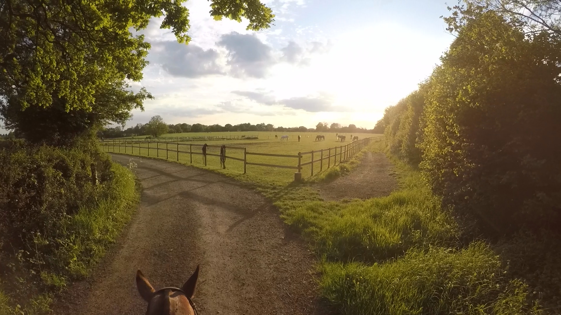 A lovely and relaxed hack as the sun sets whilst Anita and me head back to the pony lines 😍