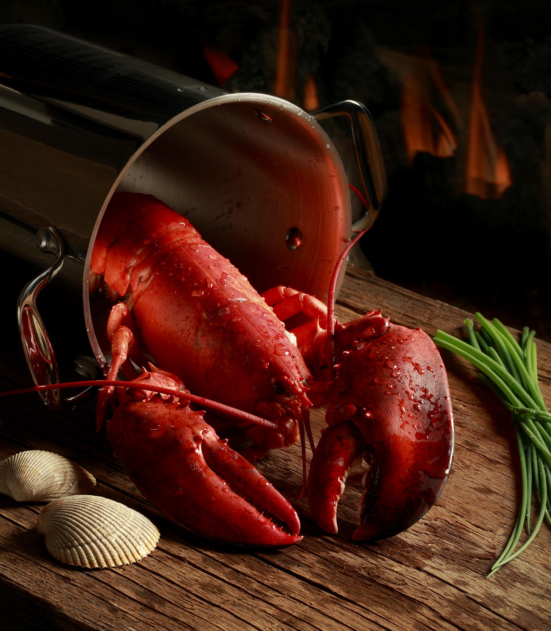 Lobster 4 -Crop.jpg