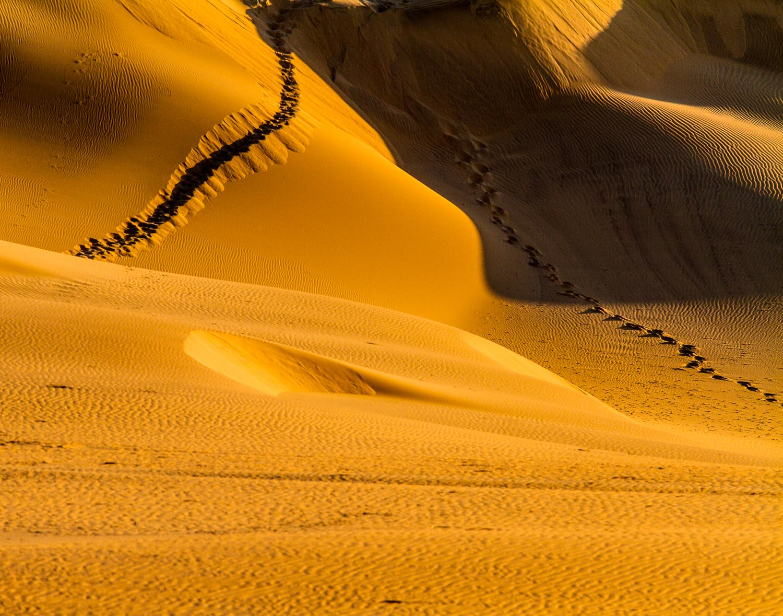 Oryx Tracks on the Dunes