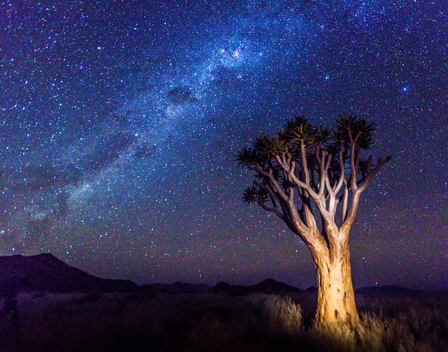 Quiver Tree, Milky Way