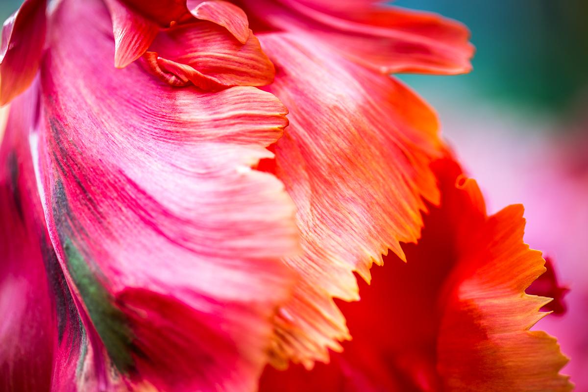 floral-abstract-petals