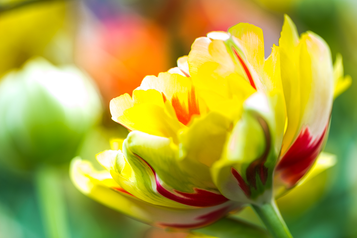 floral-art-marge-neu