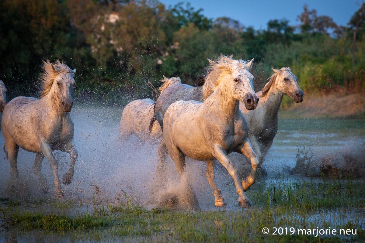 20190701_horses-392.jpg