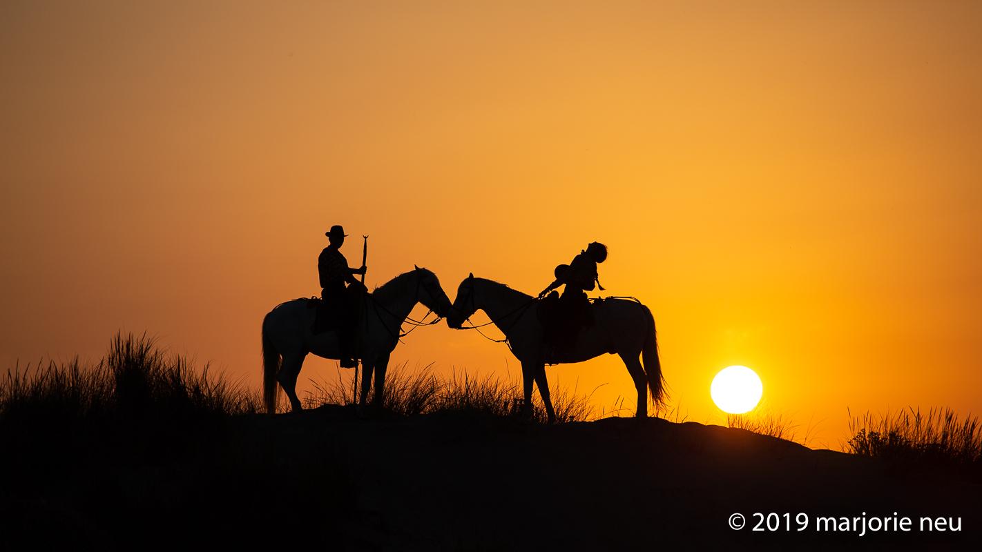 20190701_horses-483.jpg