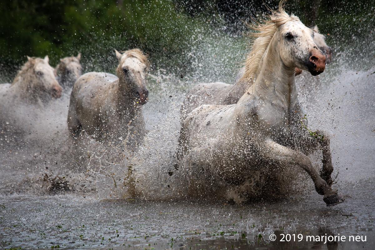 20190702_horses-244.jpg