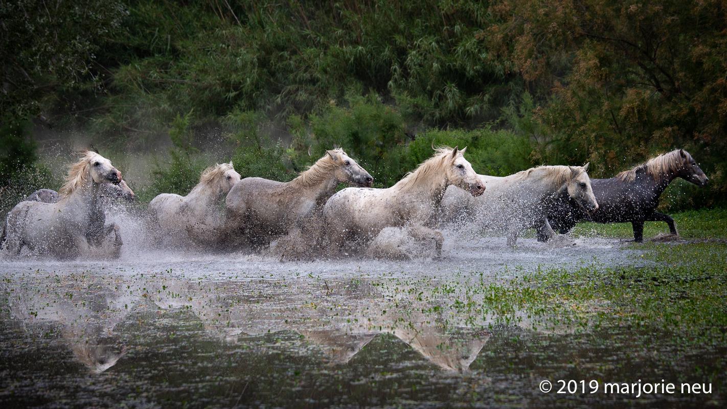 20190702_horses-343.jpg