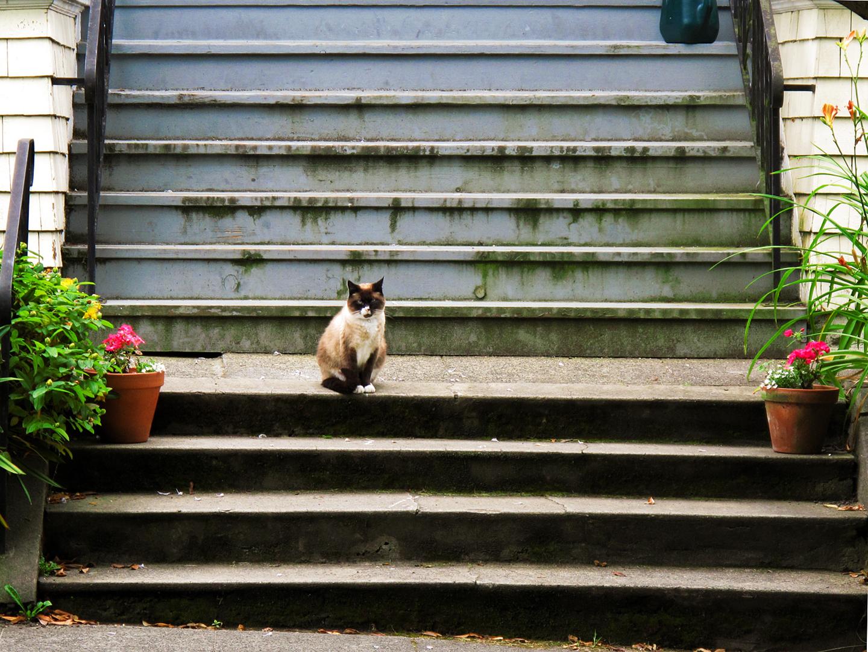 Neighborhoodcat_2010.jpg