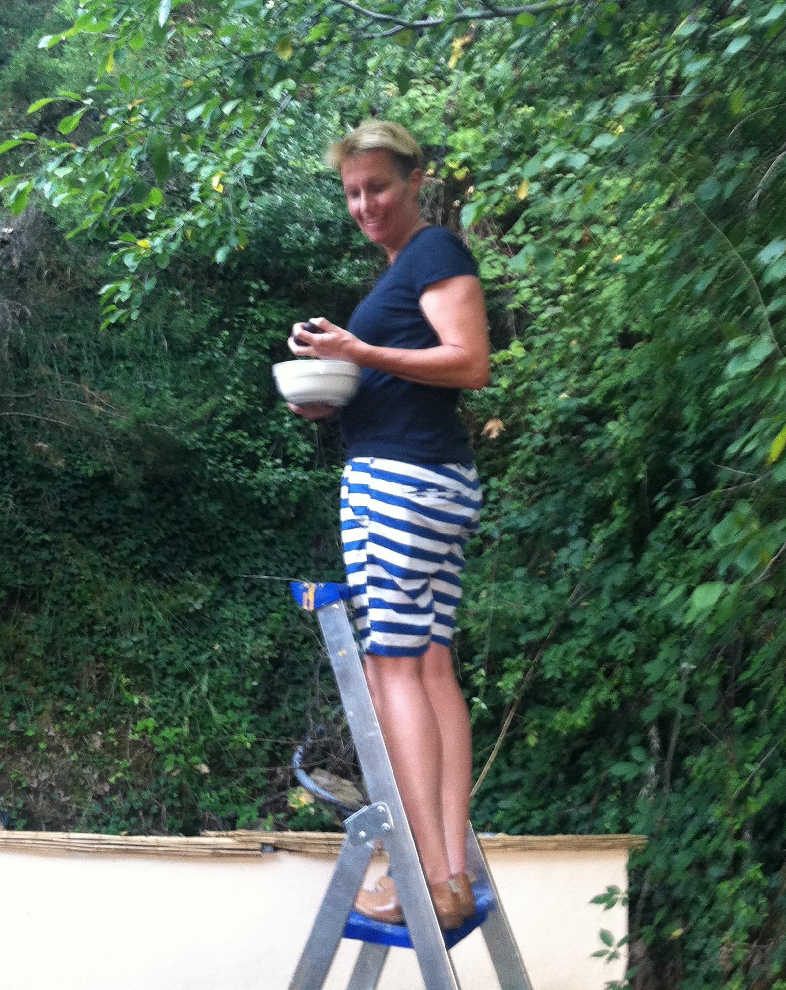 Out on bail, Falkner picks plums at Nancy Silverton's back yard