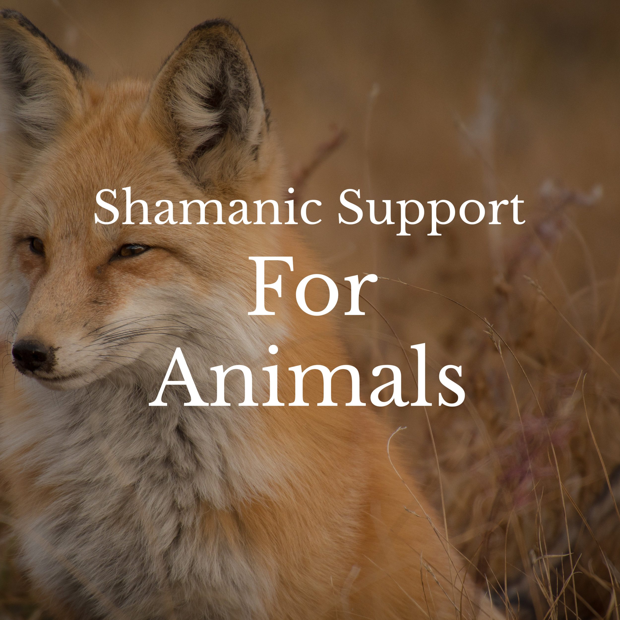 Shamanic support and animal communication for animals of all kinds. Offered over the phone only.