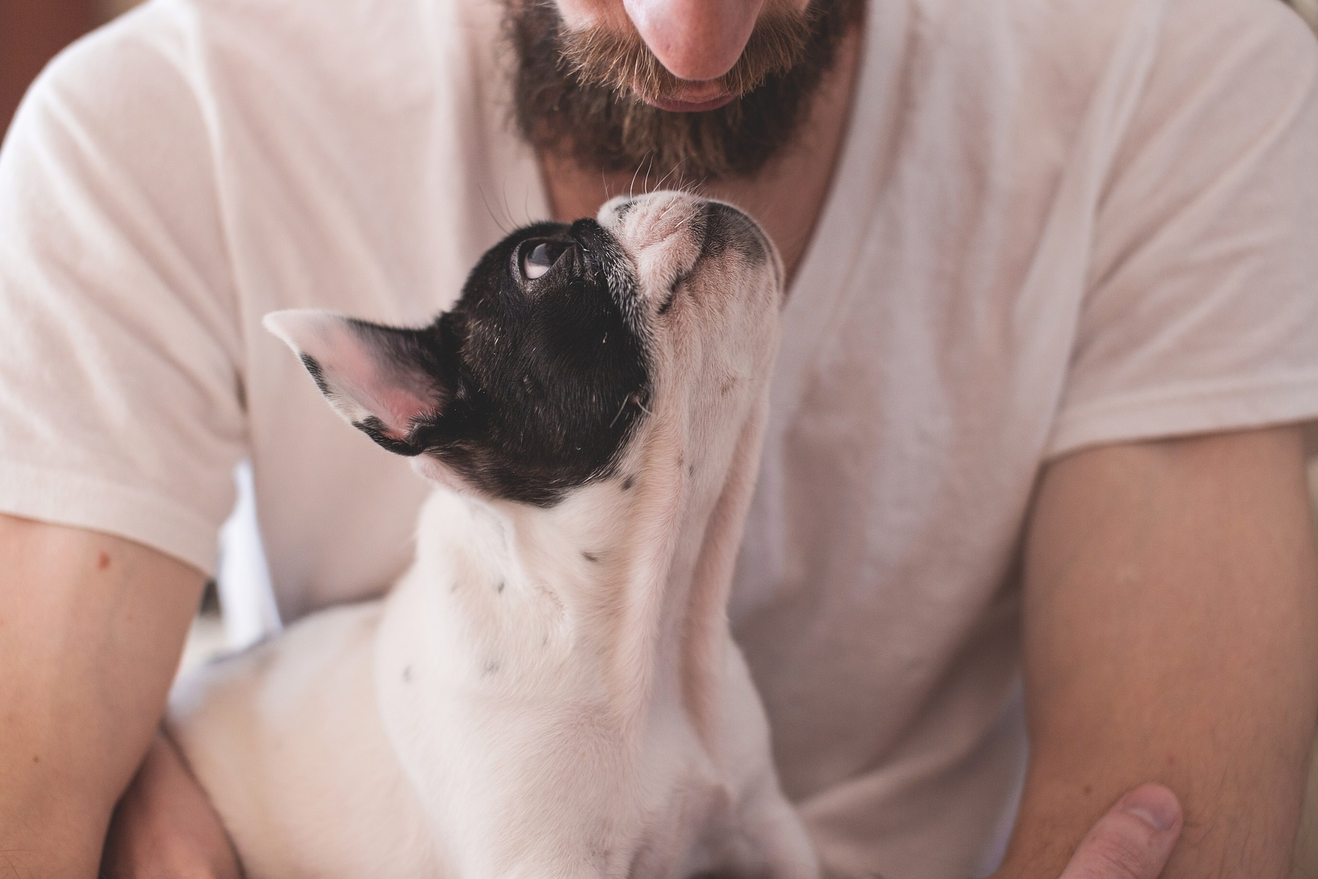 How to get the most from an animal communication session