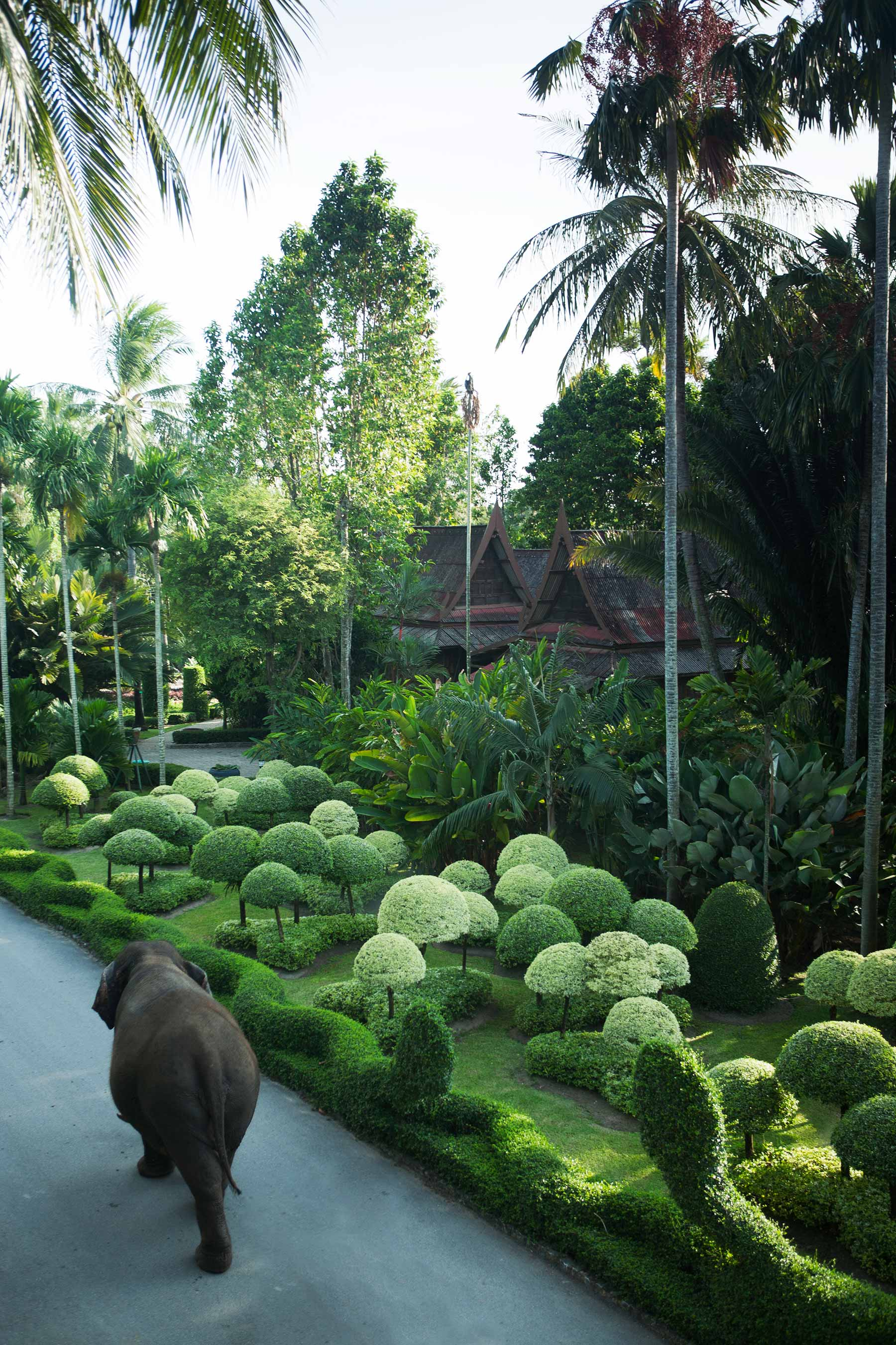 thailand_elephant_walking_park_IMG_8122websize.jpg