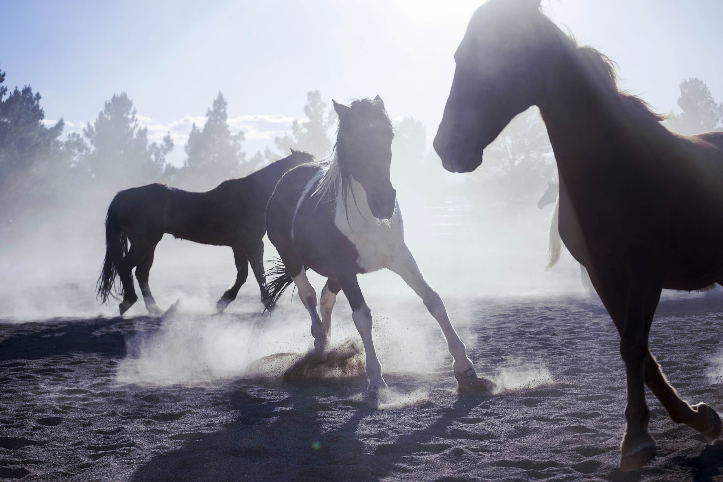 horses_DSC04616_retouched_portfolio.jpg
