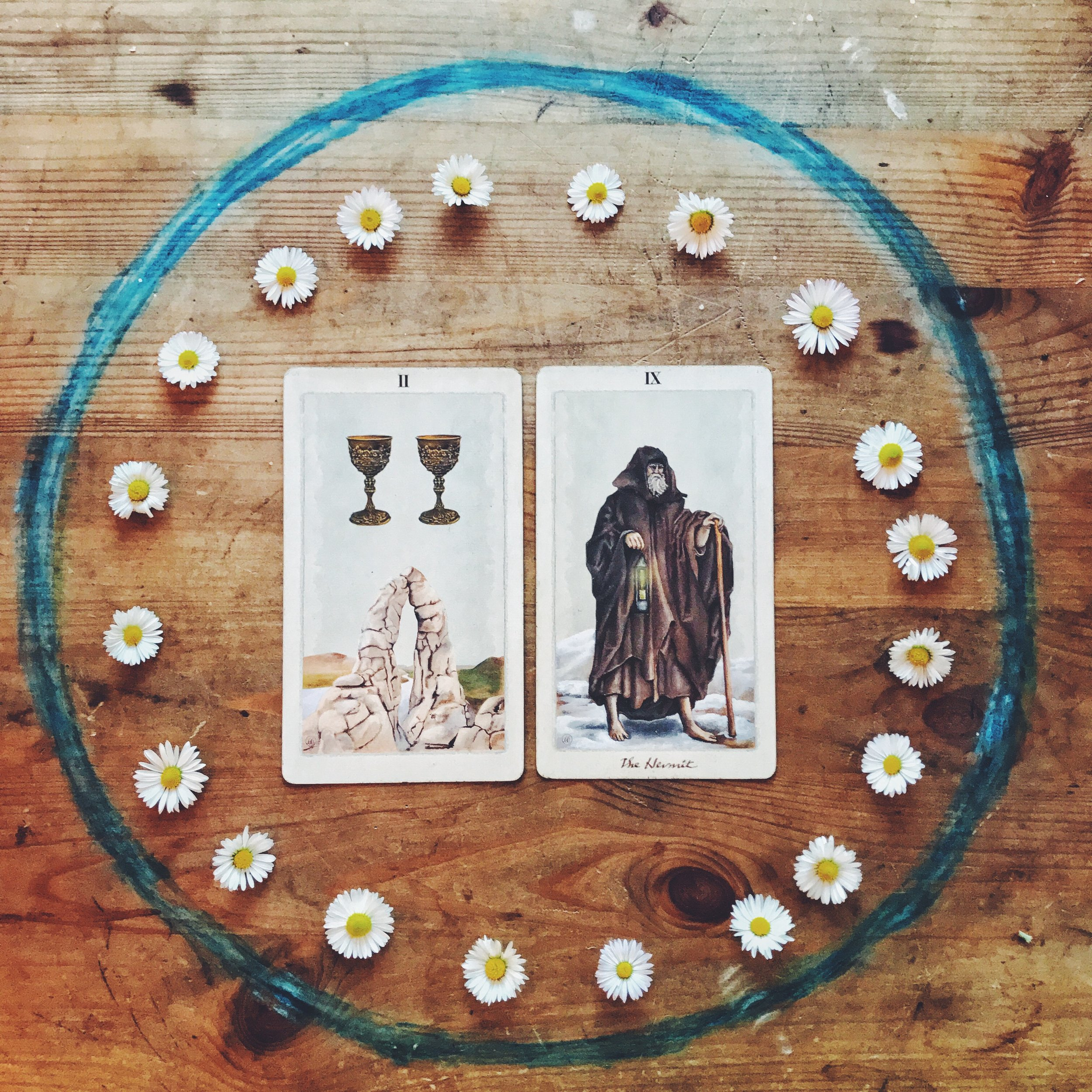daisy flower essence and tarot