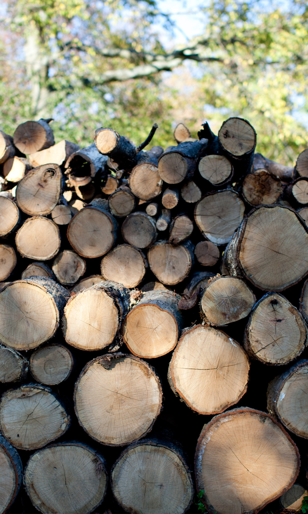 Logs_colour.jpg