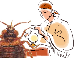 bed bug fortune telling