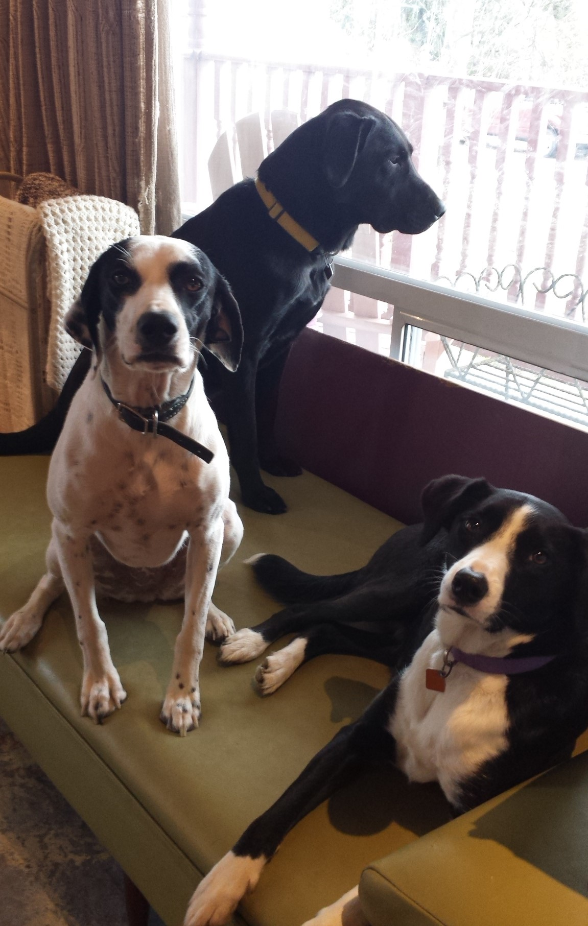Our Bed Bug K9 Pack - Why they are so effective…