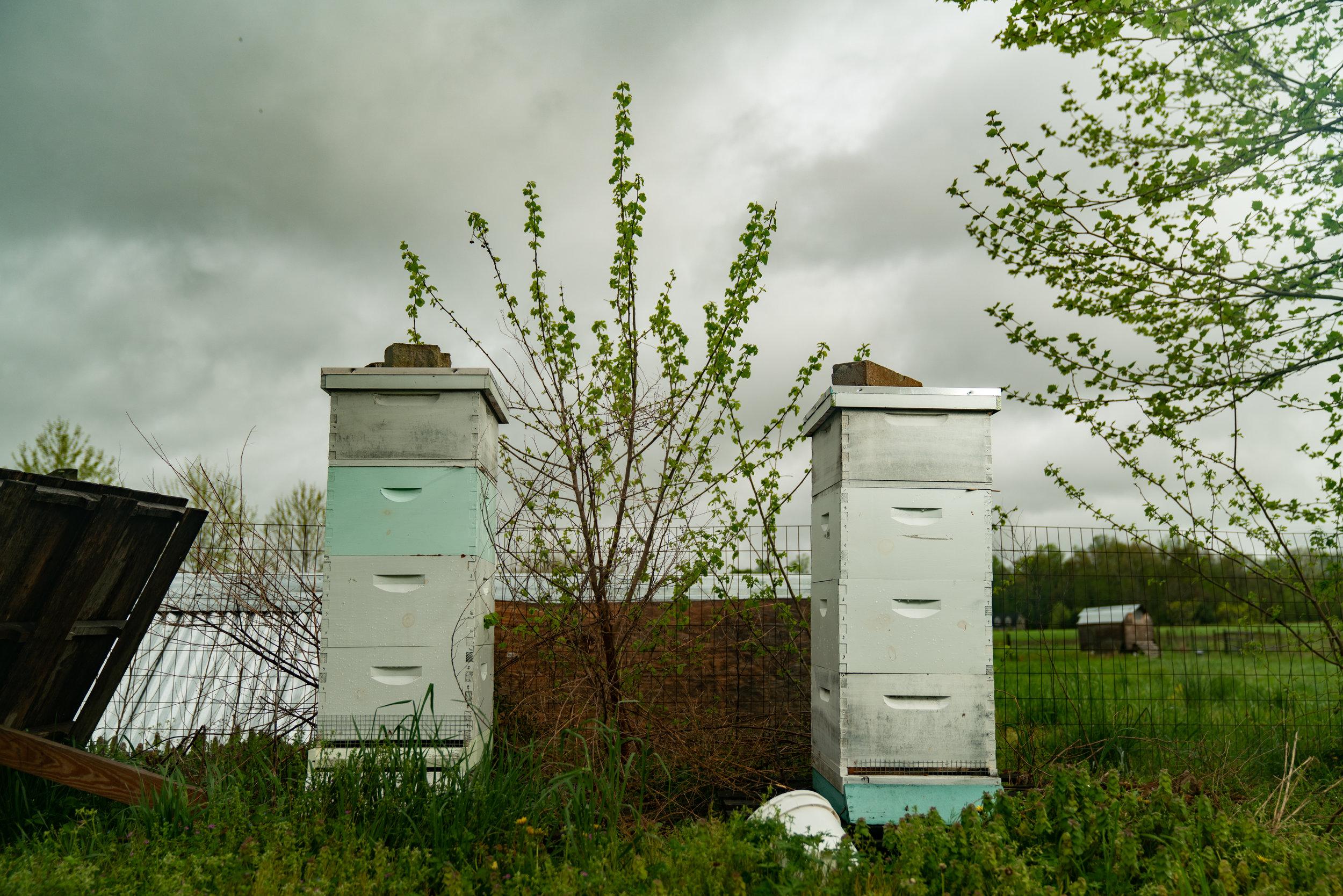 BeeKeeper_George-5.jpg