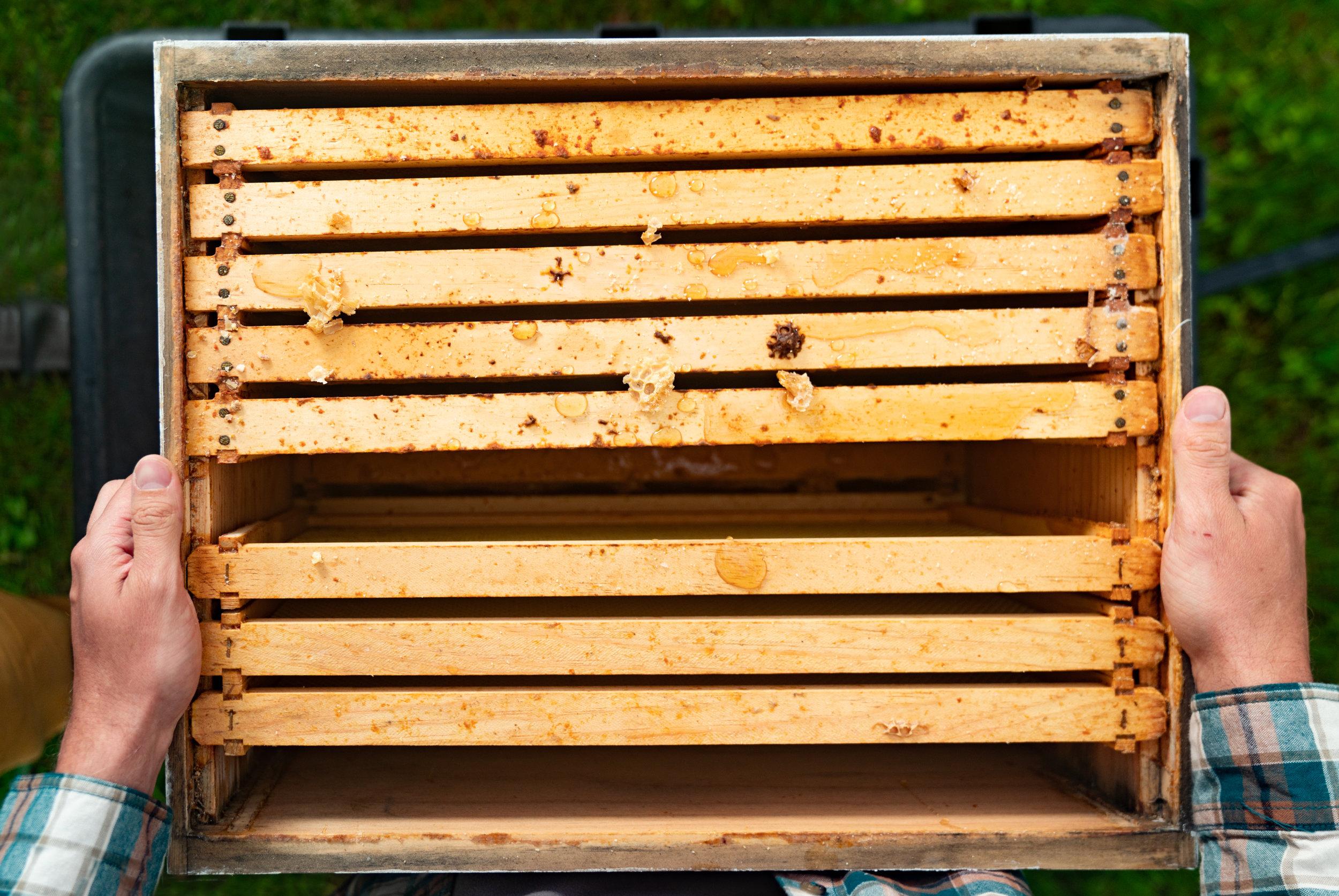 BeeKeeper_George-6.jpg