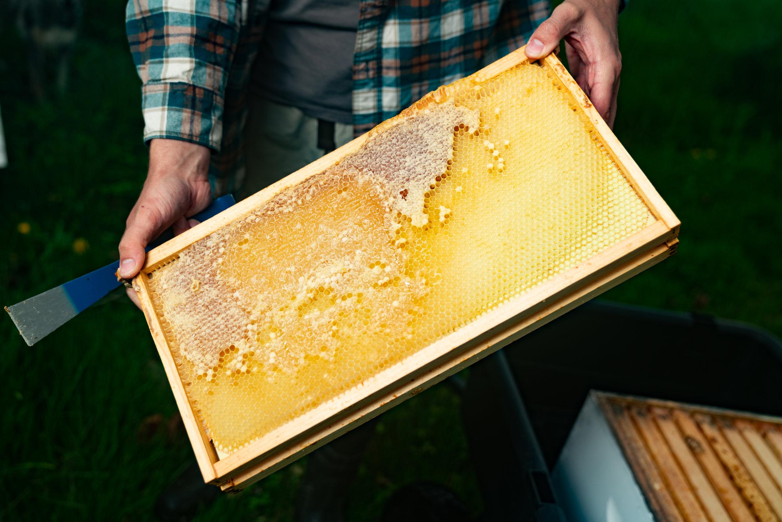 BeeKeeper_George-7.jpg