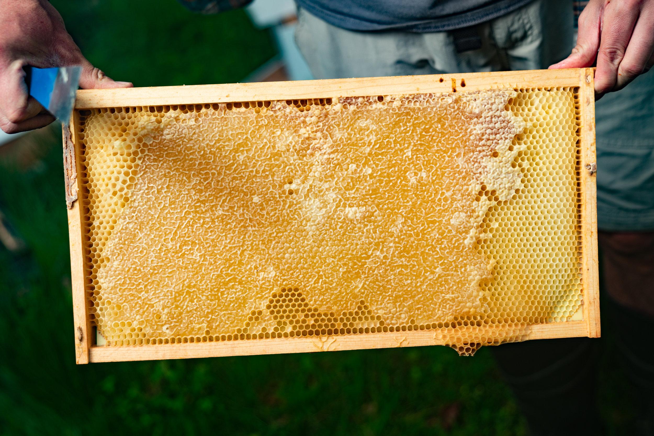 BeeKeeper_George-8.jpg