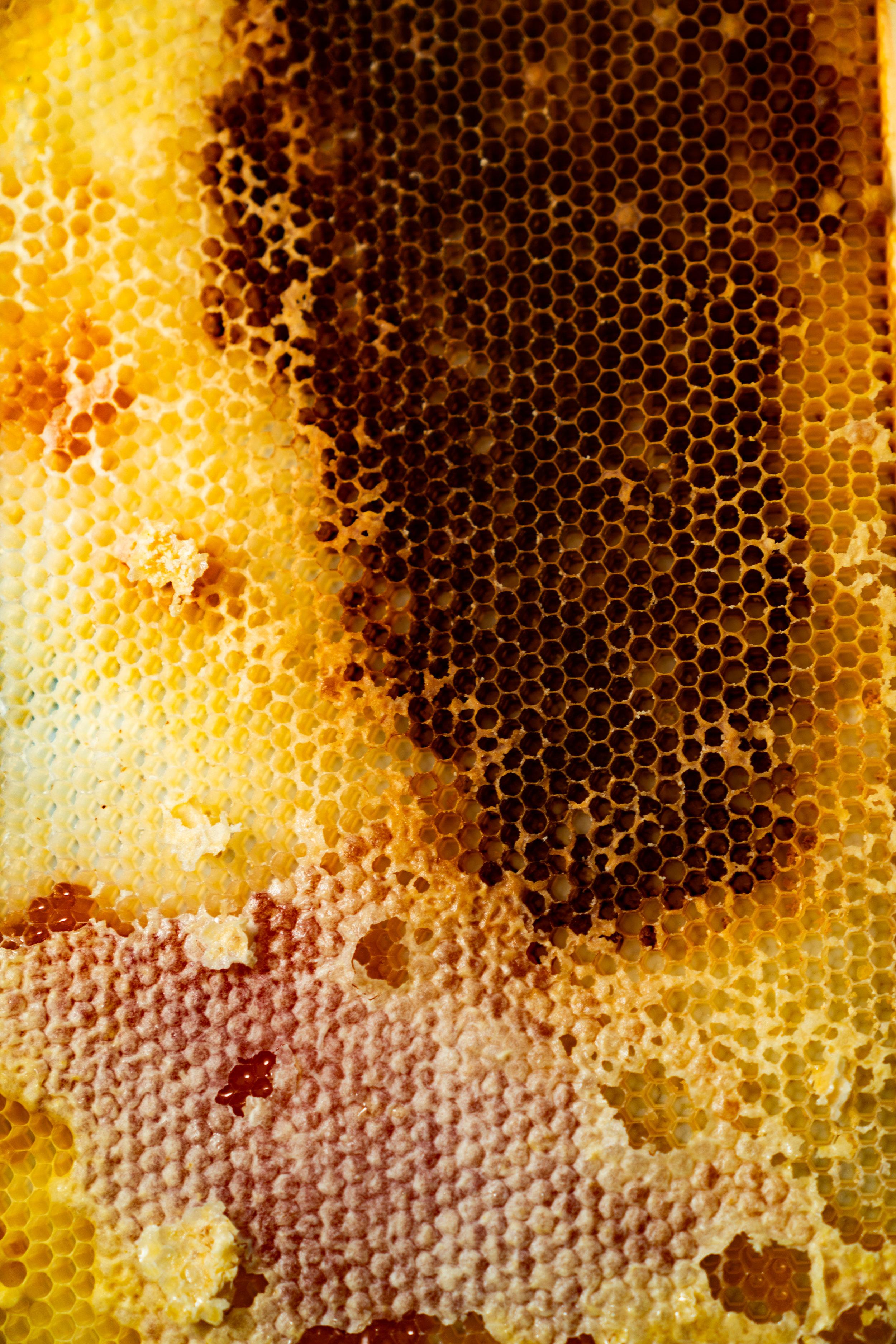BeeKeeper_George-10.jpg