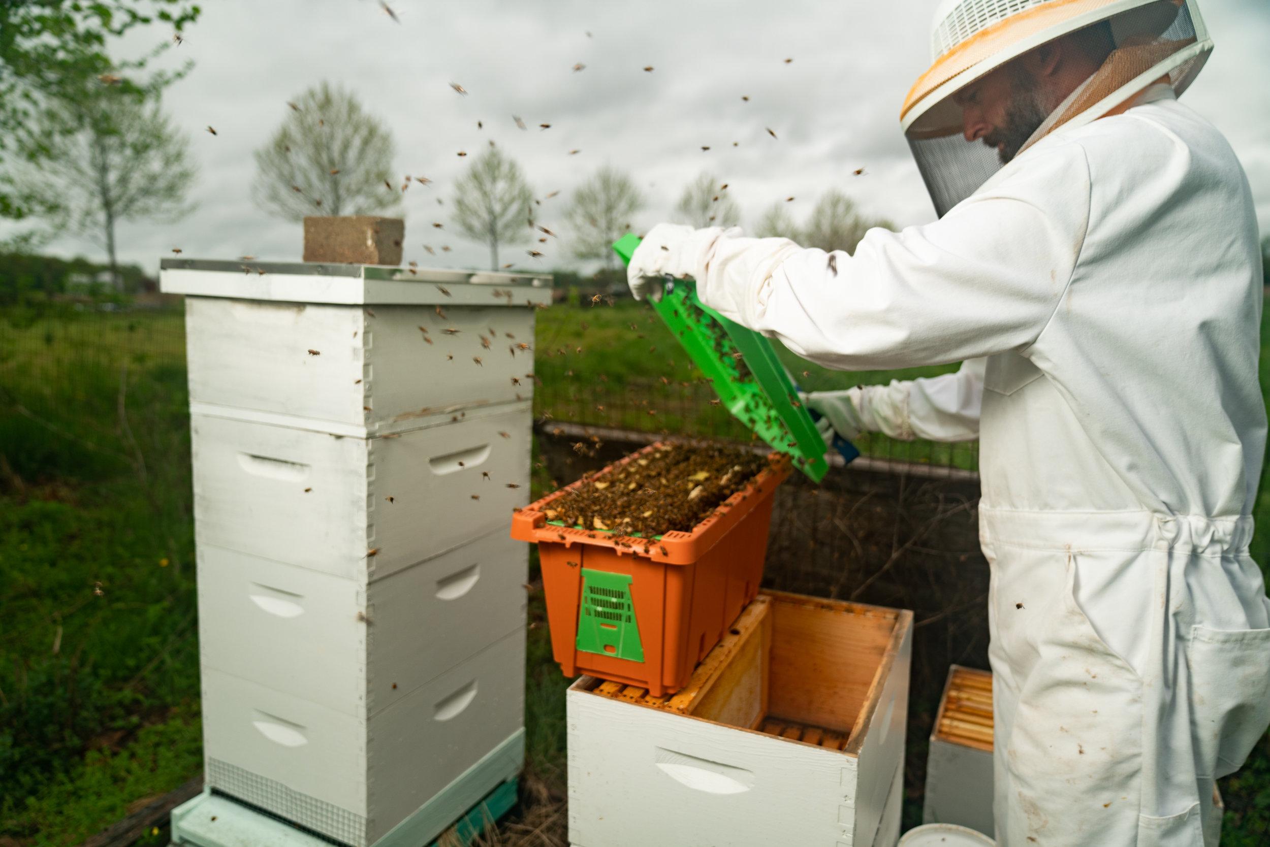 BeeKeeper_George-14.jpg