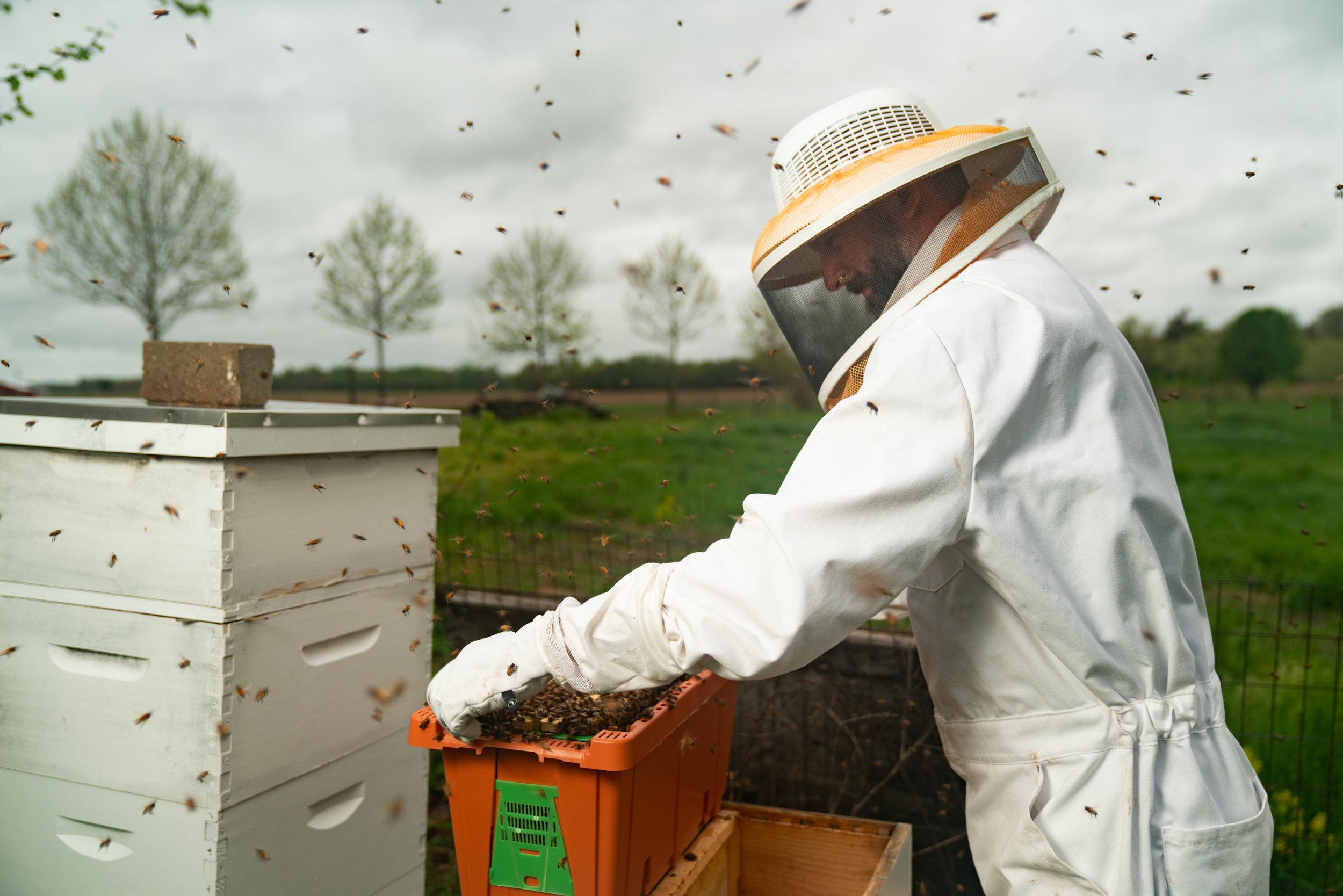 BeeKeeper_George-16.jpg
