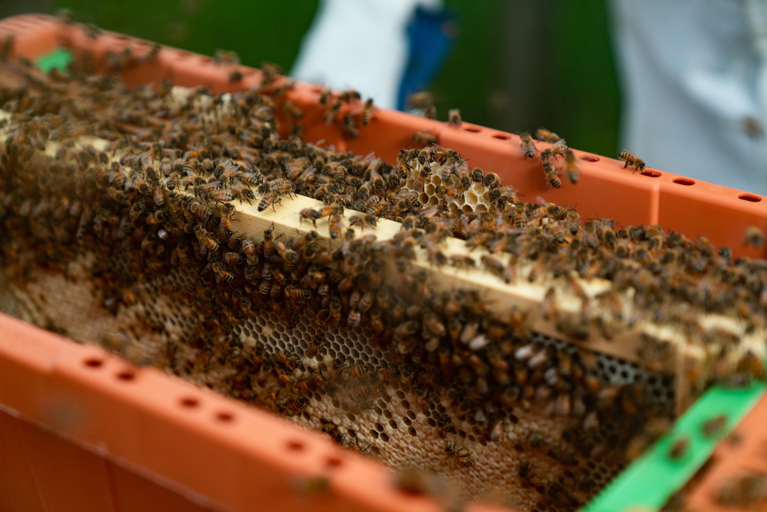 BeeKeeper_George-18.jpg