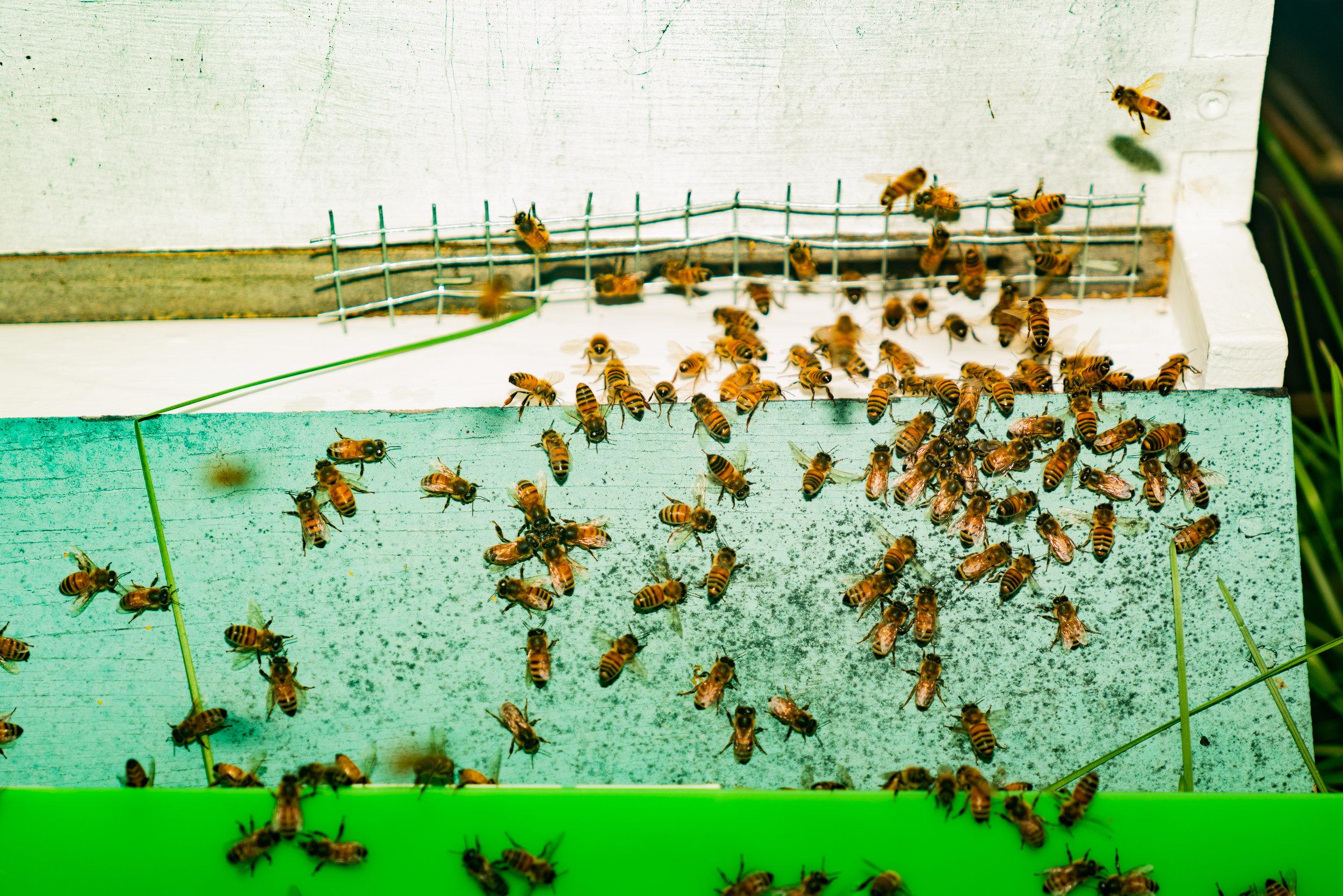BeeKeeper_George-20.jpg
