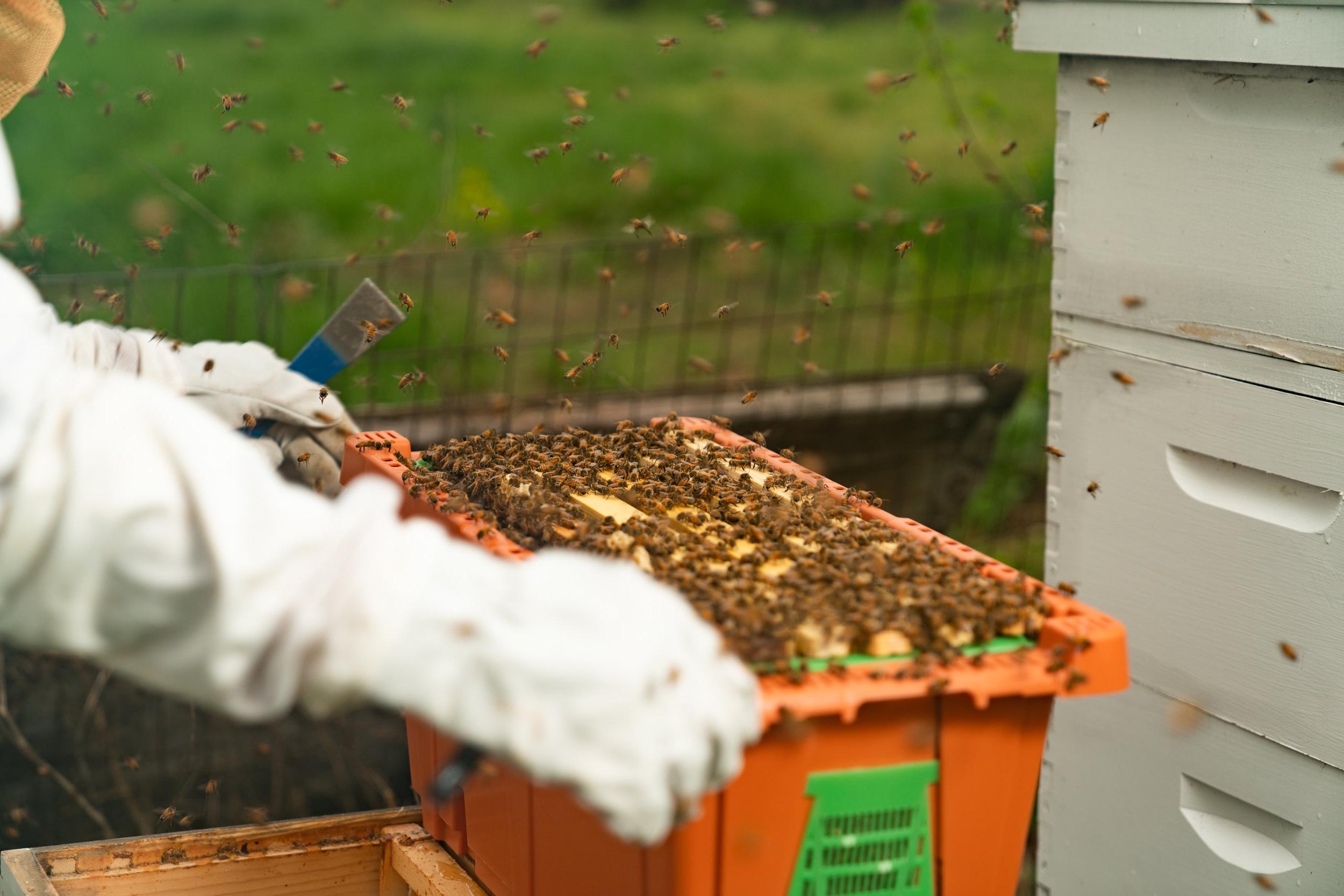 BeeKeeper_George-15.jpg