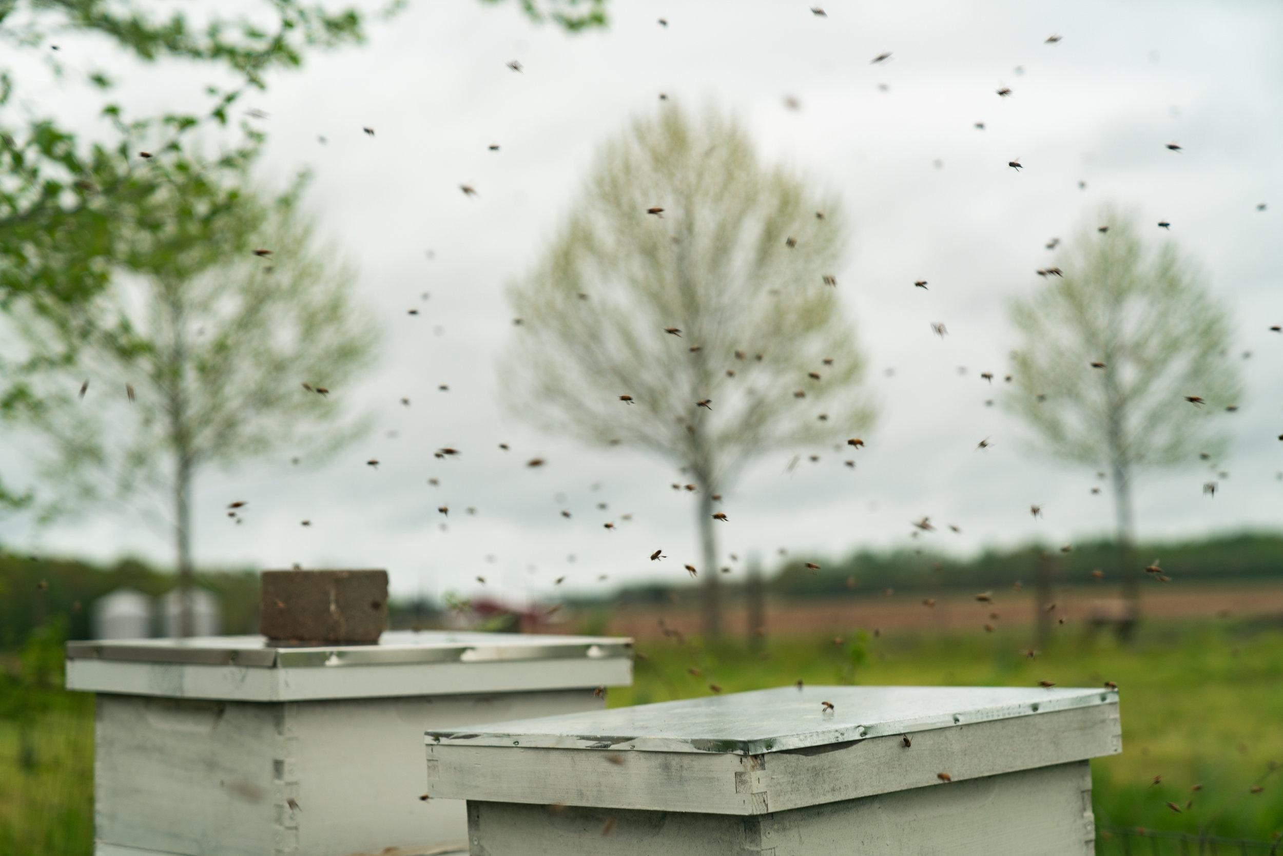 MarkHoelscher_BeeKeeping_23.jpg