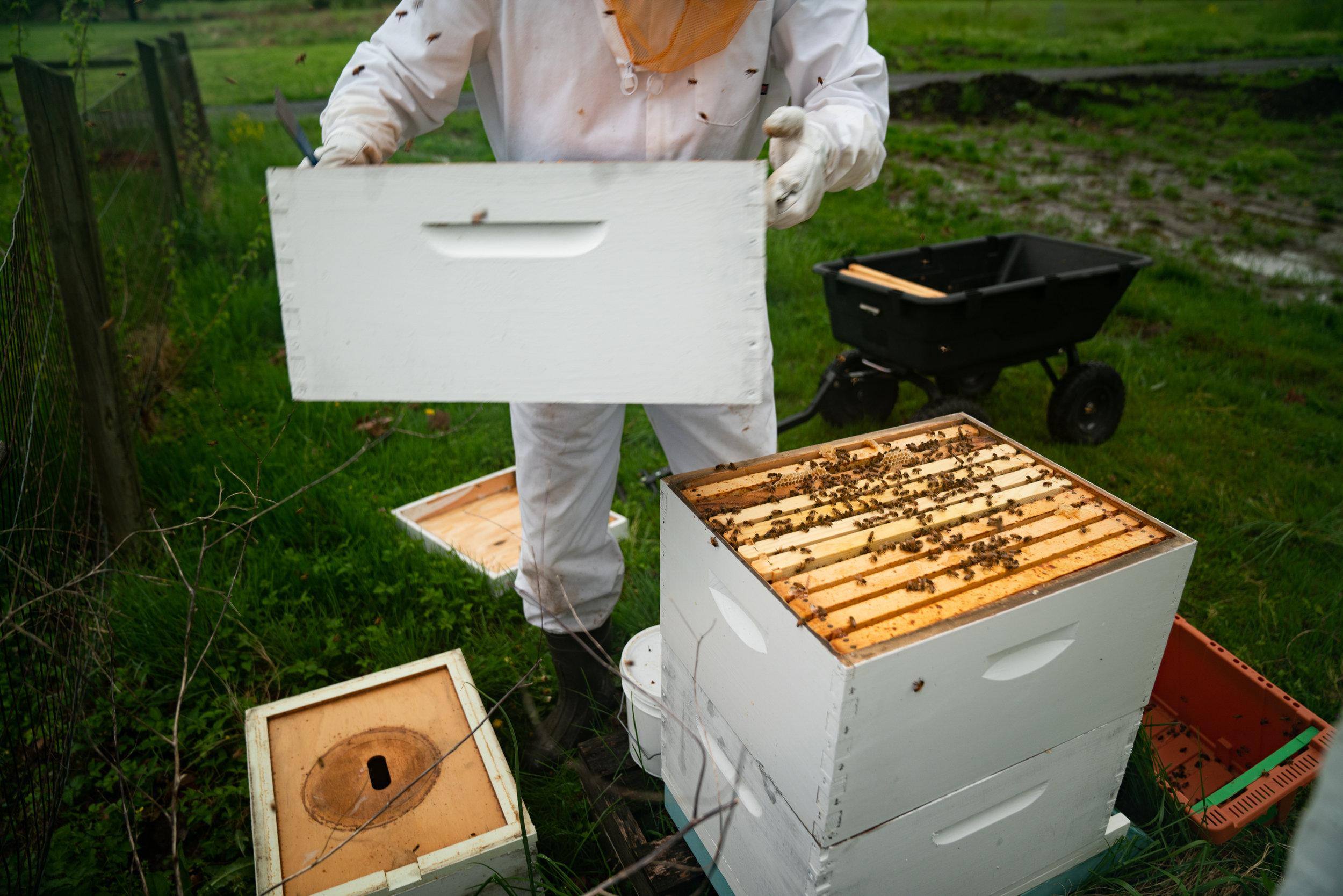 MarkHoelscher_BeeKeeping_24.jpg