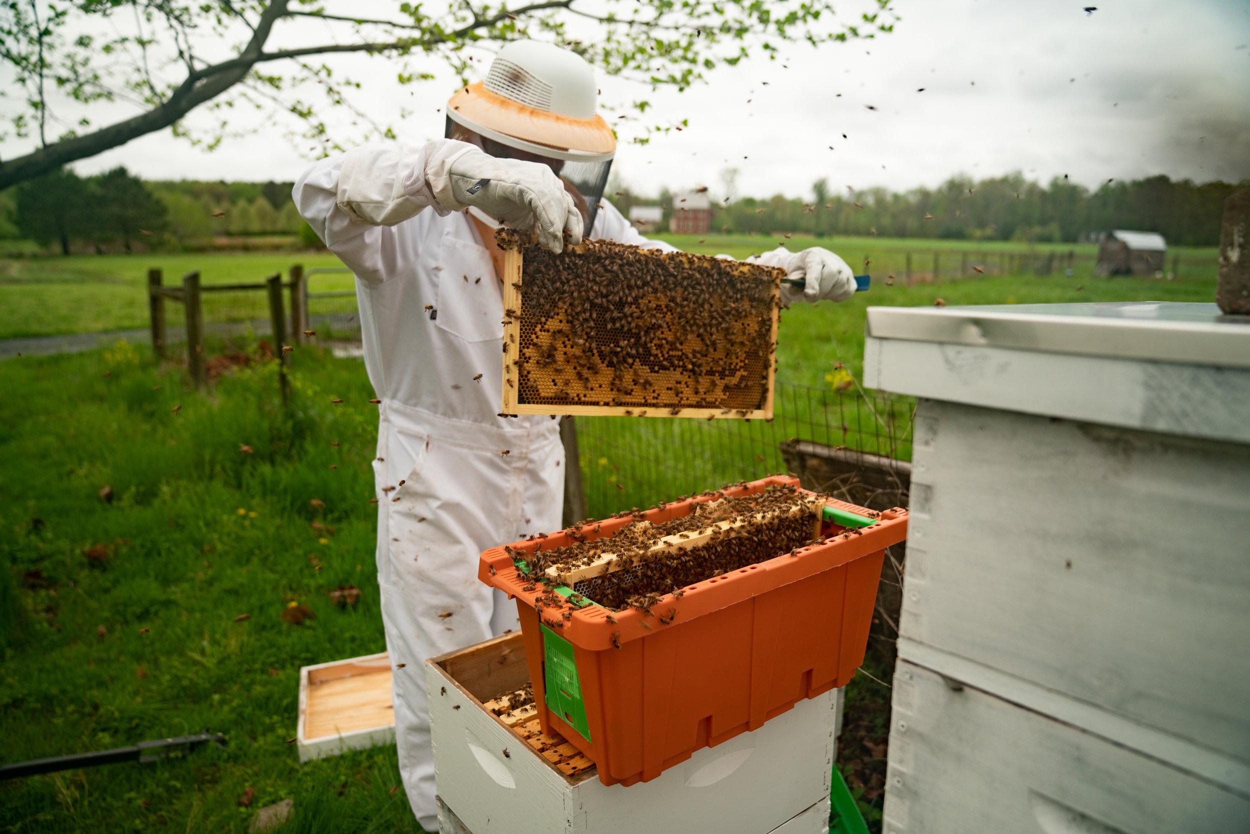 MarkHoelscher_BeeKeeping_25.jpg