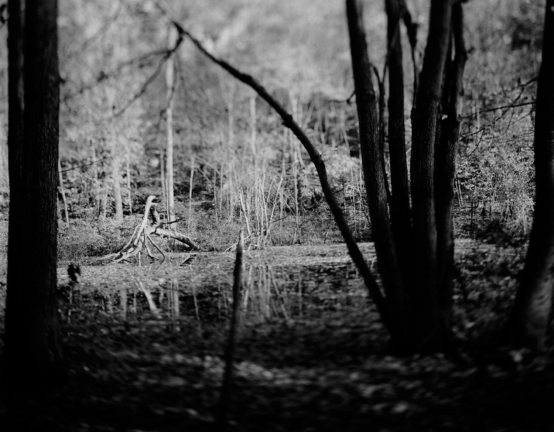 pond_reachingtree.jpg