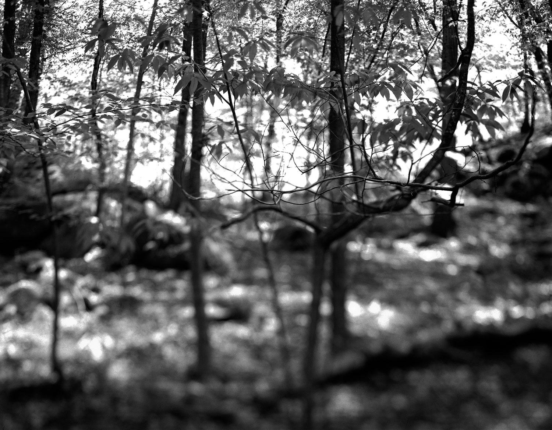 arm-sweep-treeG.jpg