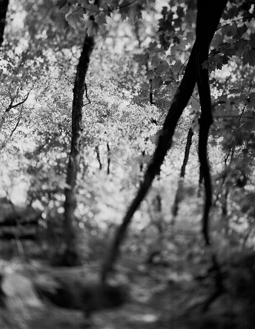 swirling-ground-treeG.jpg